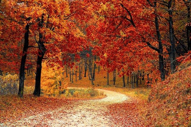 fall-1072821_640 (1)